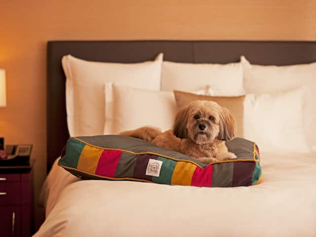 Andaz Dog Laying On Bed