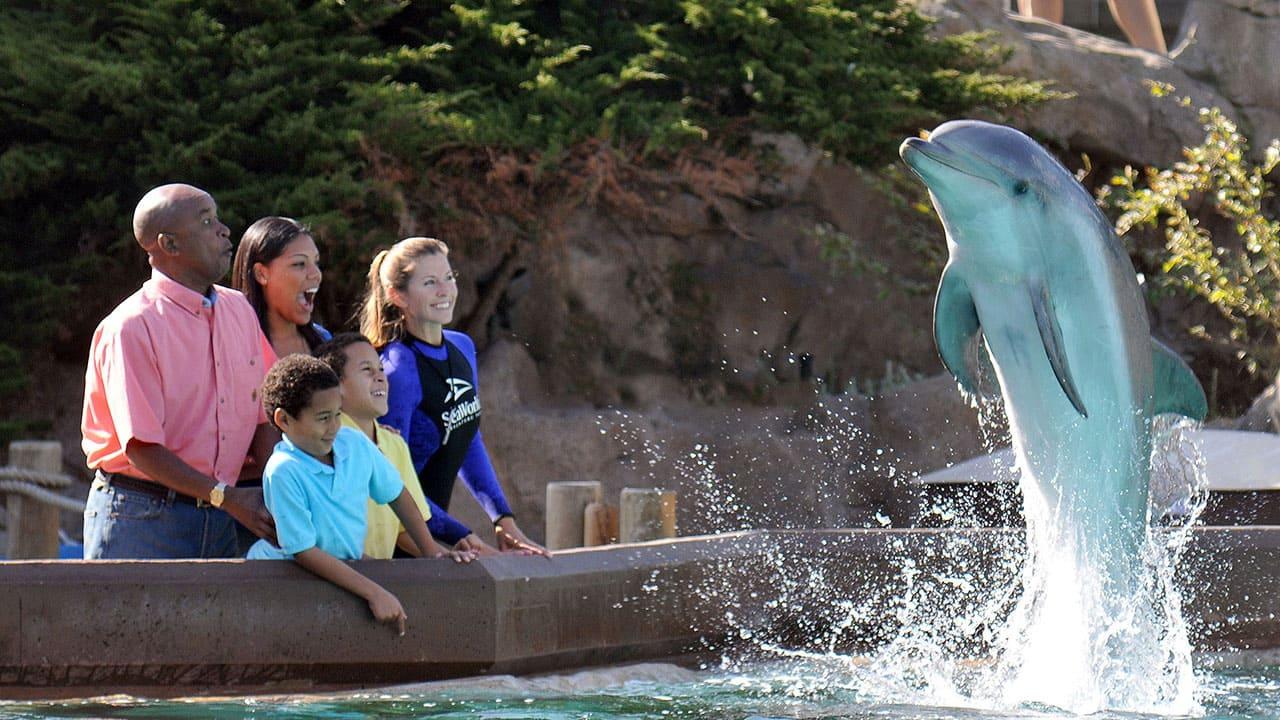 Sea World Dolphin Trainer