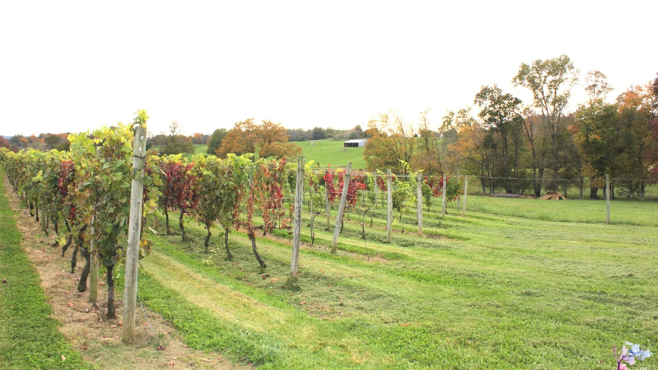 Fall at Greenhill Winery