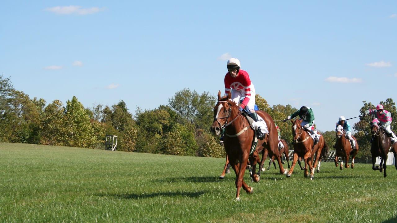 Morven Park Races