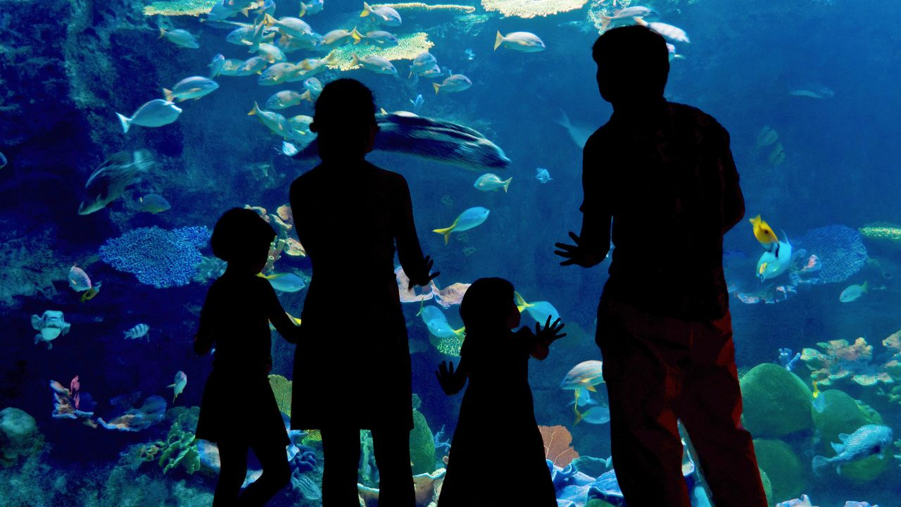 Family at oceanarium