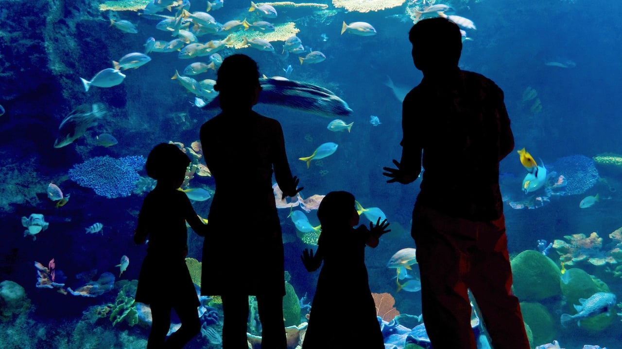 Family in Oceanarium