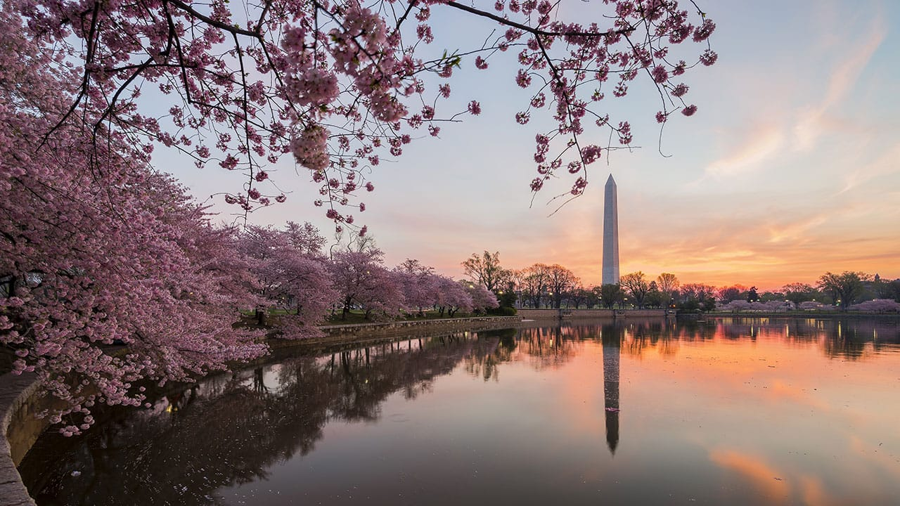 Hyatt Place Arlington/Courthouse Washington Monument Cherry Blossom Photo