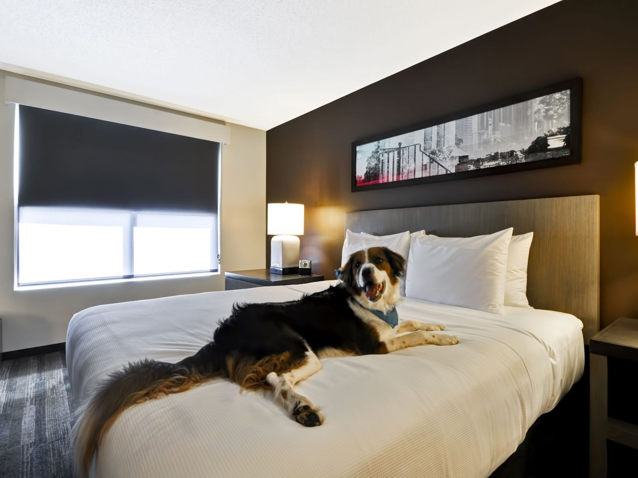 Dog on the bed at Hyatt Place Kansas City Airport