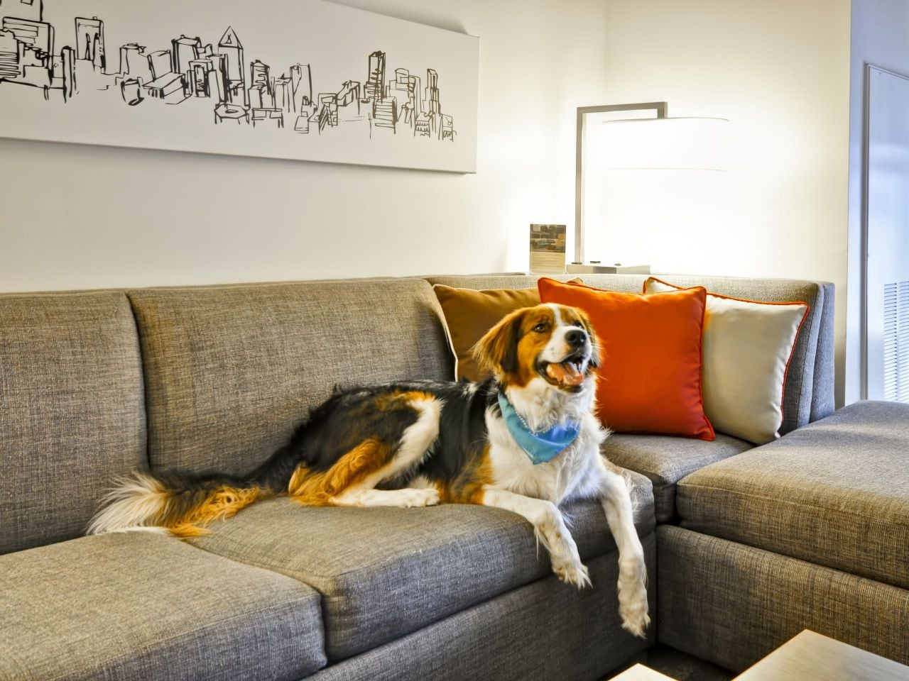 Hyatt Place West Palm Beach Downtown Dog on Couch