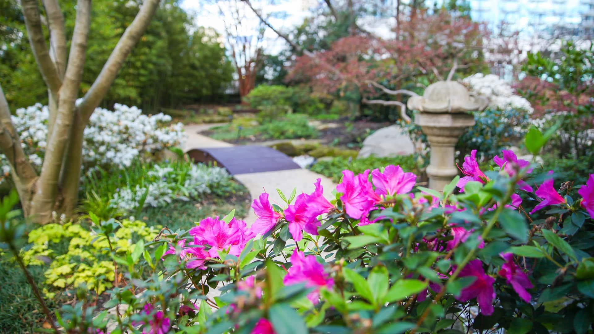 Garden at Atlanta Buckhead