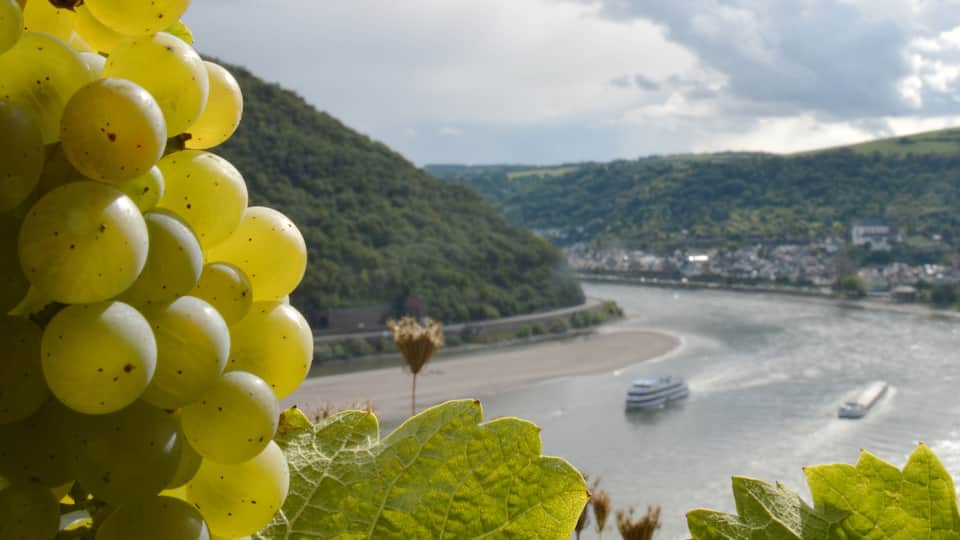 MAINZ Wine Region