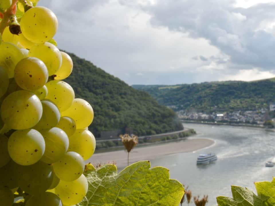 Summer Break for Wine Lovers