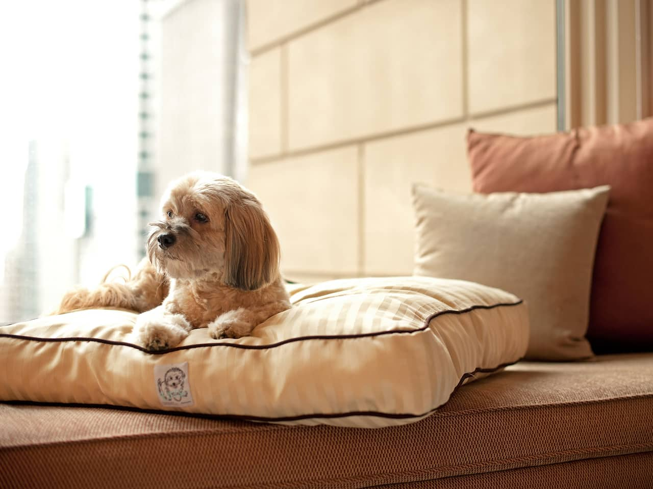Dog Laying Window Bench