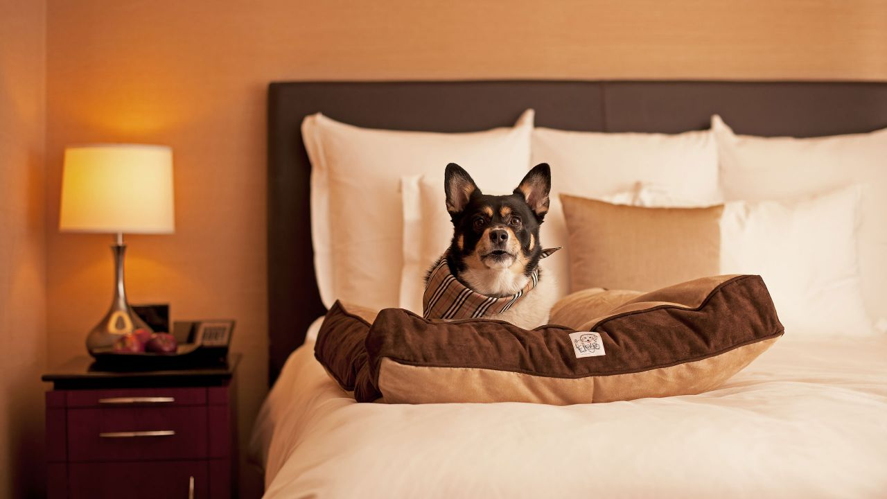 Hyatt House Dallas / Lincoln Park Pet-friendly