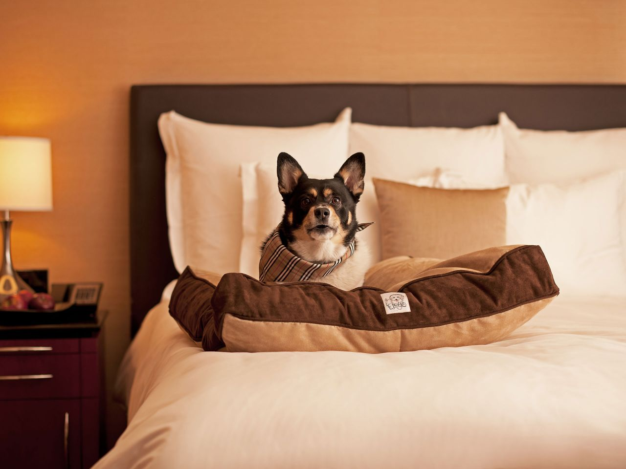 Hyatt Regency Newport Beach Dog on Bed