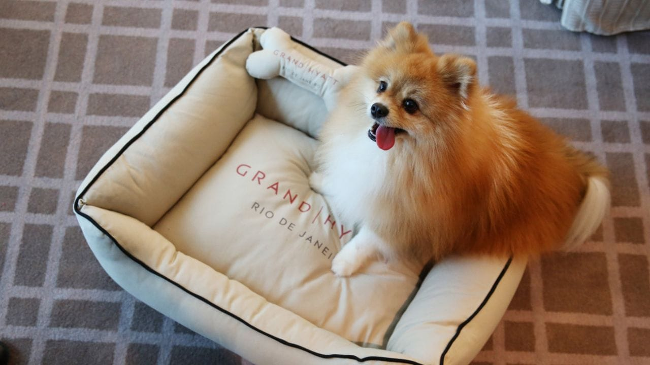 Grand Hyatt Pet-friendly