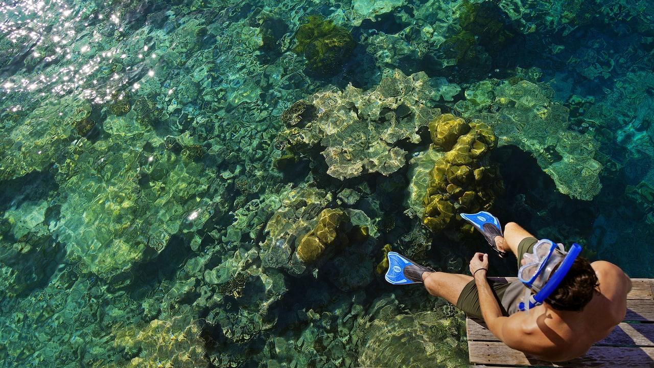 House Reef Snorkel