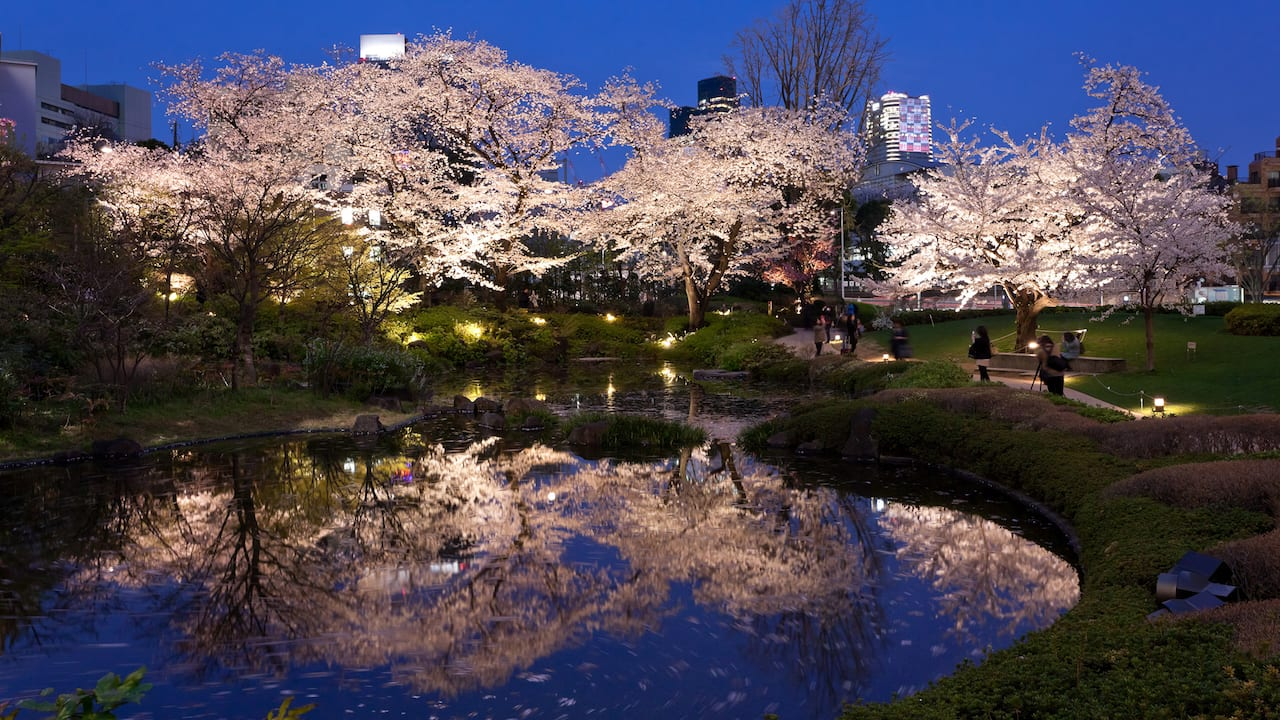 Grand Hyatt Tokyo Roppongi Hills Mohri Garden Cherry Blossoms グランド ハイアット 東京 六本木ヒルズ 毛利庭園 桜