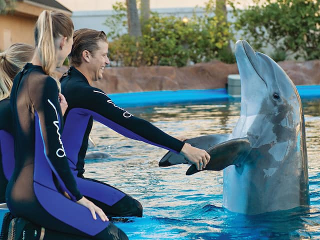 dolphin trainers