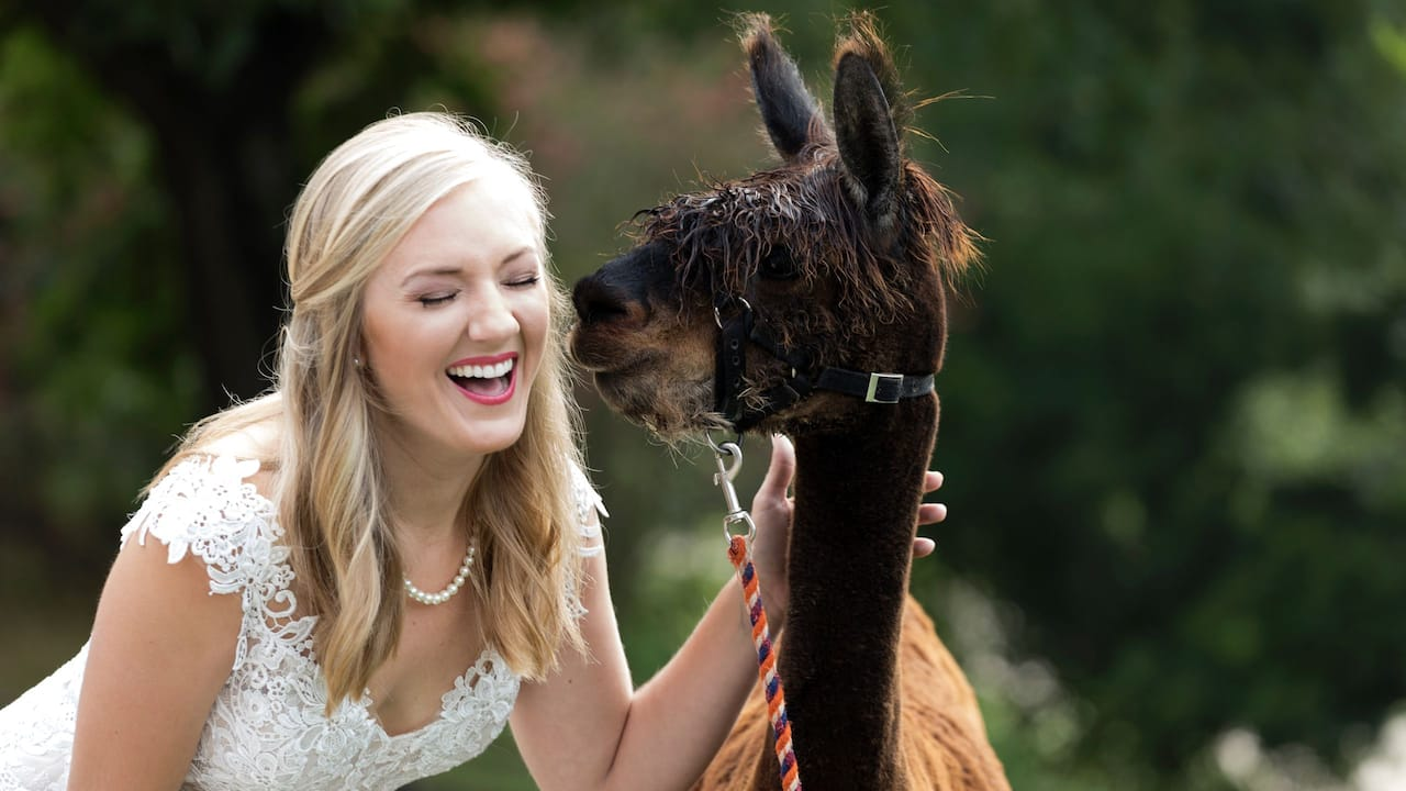 Wedding Alpaca
