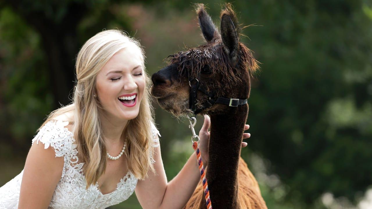 Wedding Alpaca