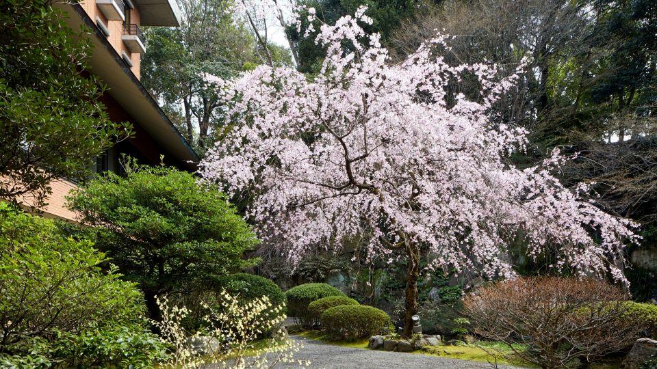 Sakura Japanese Garden
