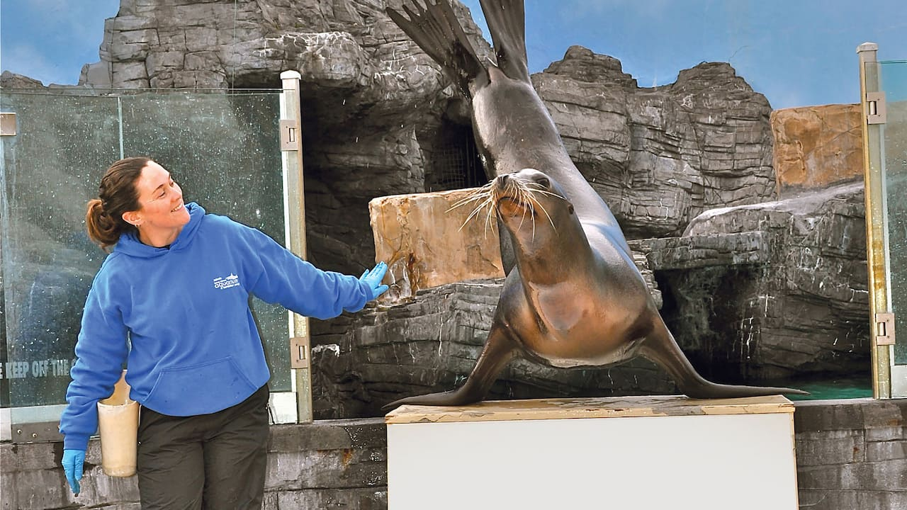 Long Island Aquarium Sea Lion Show