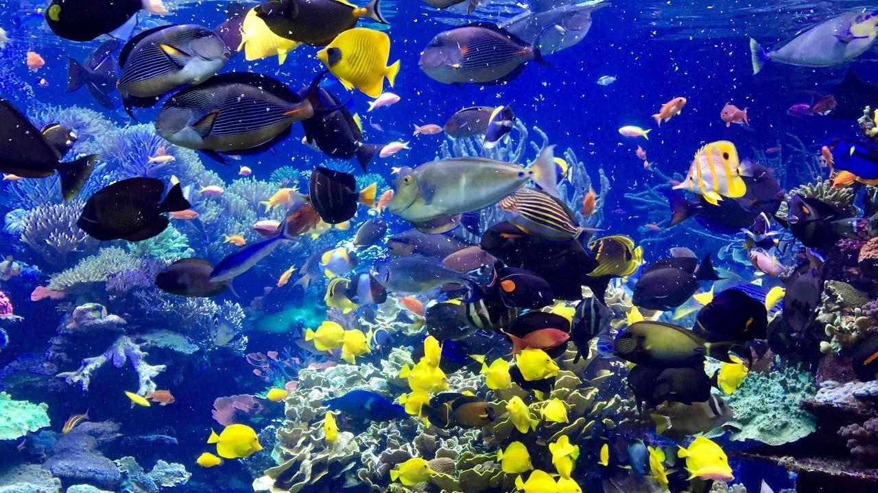 Long Island Aquarium Exhibit