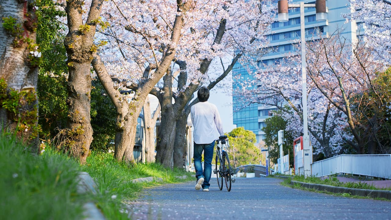 Hyatt Regency Osaka - Walk under the cherry blossom