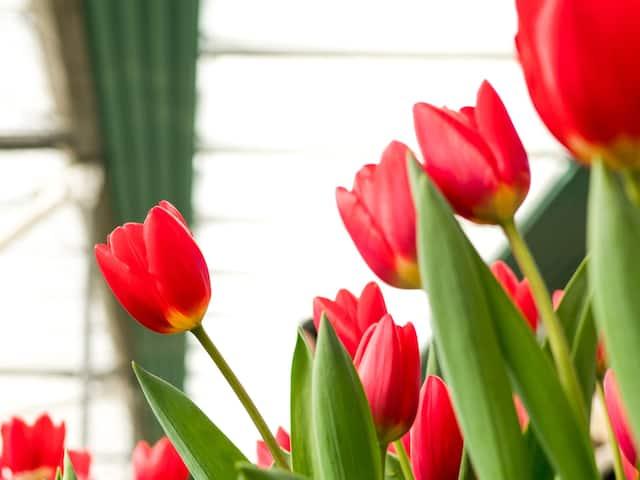 Andaz Amsterdam Prinsengracht Flowers