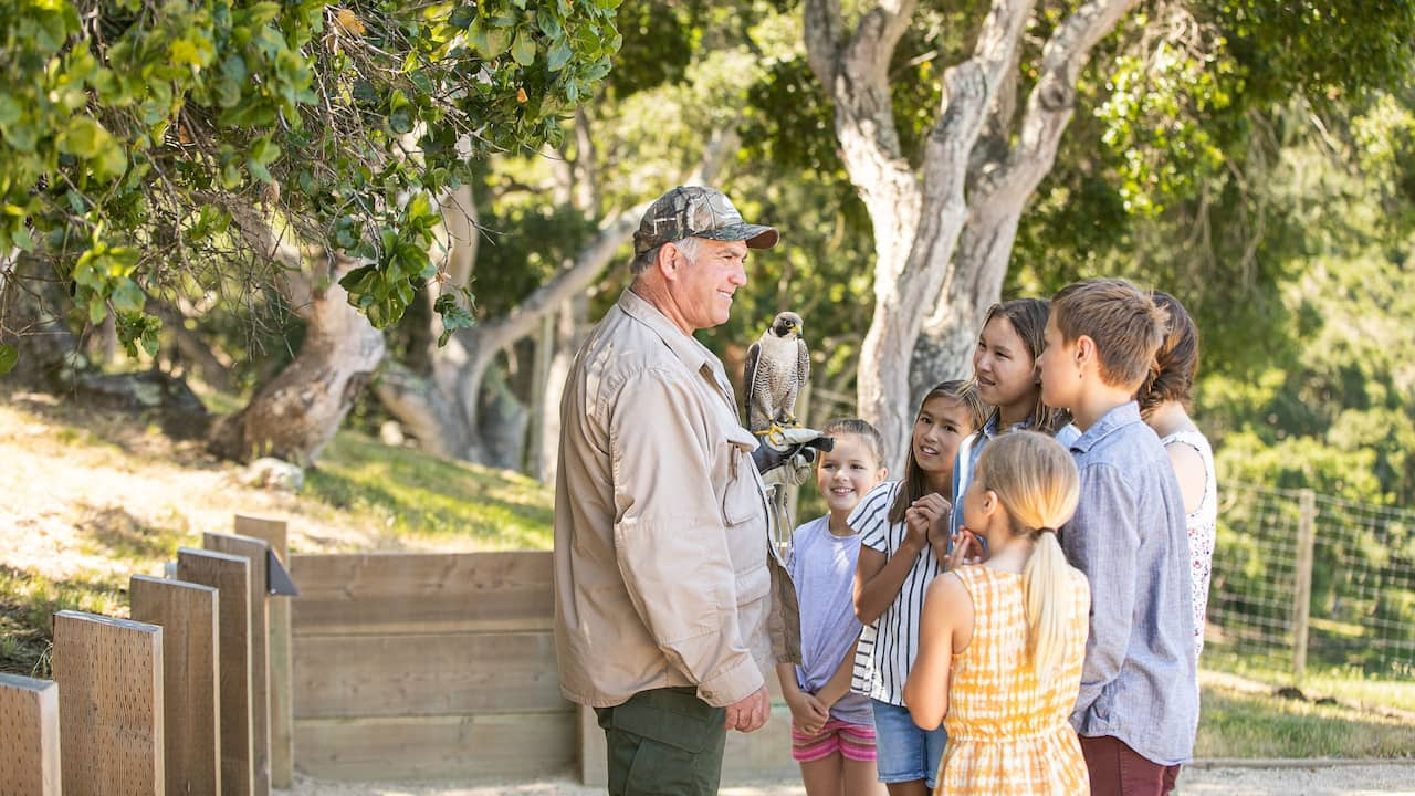 Lifestyle Activities Falconry Antonio with Kids and Falcon