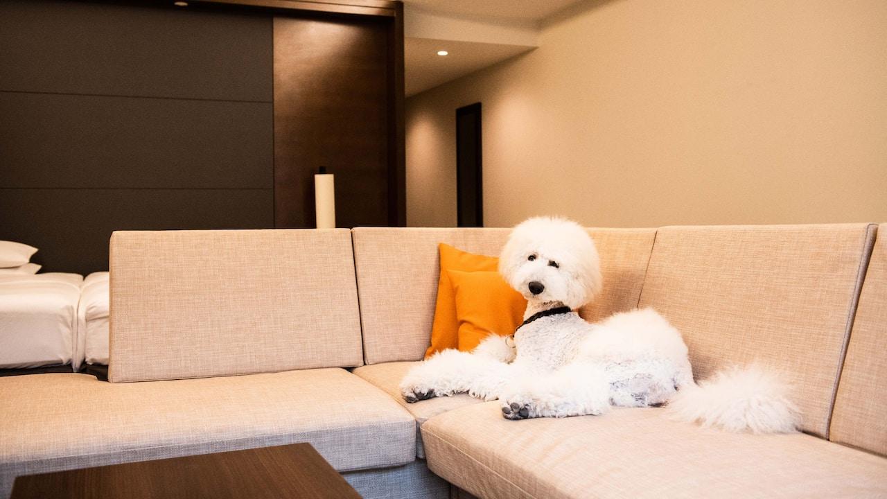 Hyatt Regency Hakone Resort & Spa| Dog Friendly Room
