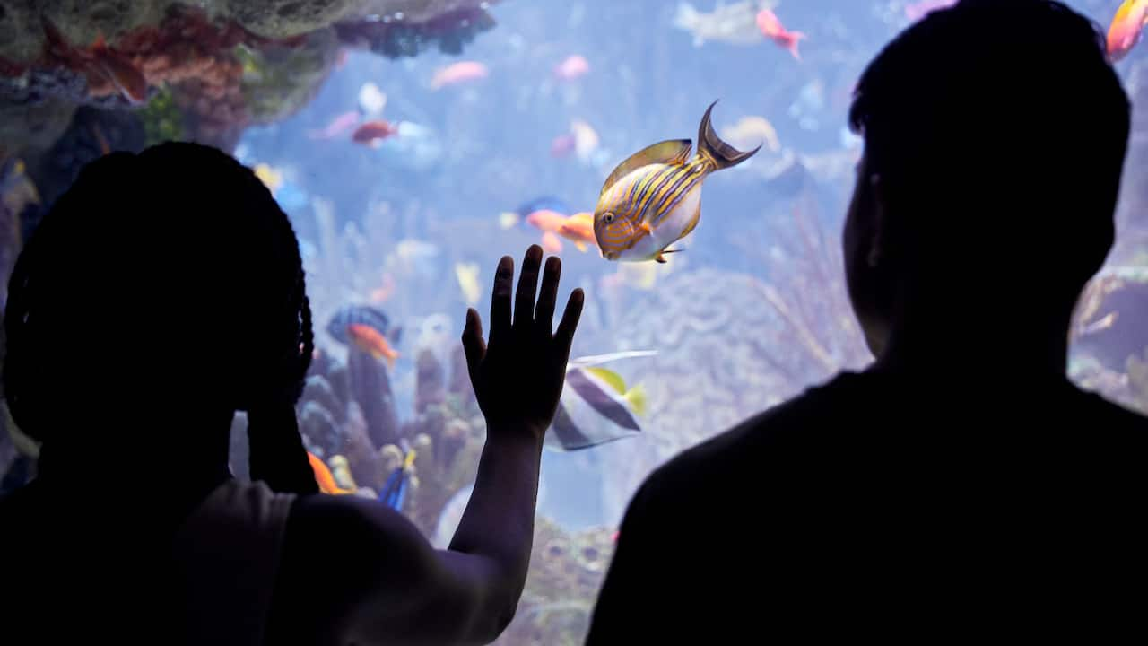 Aquarium in Chicago | Hyatt Place Chicago - Medical / University District