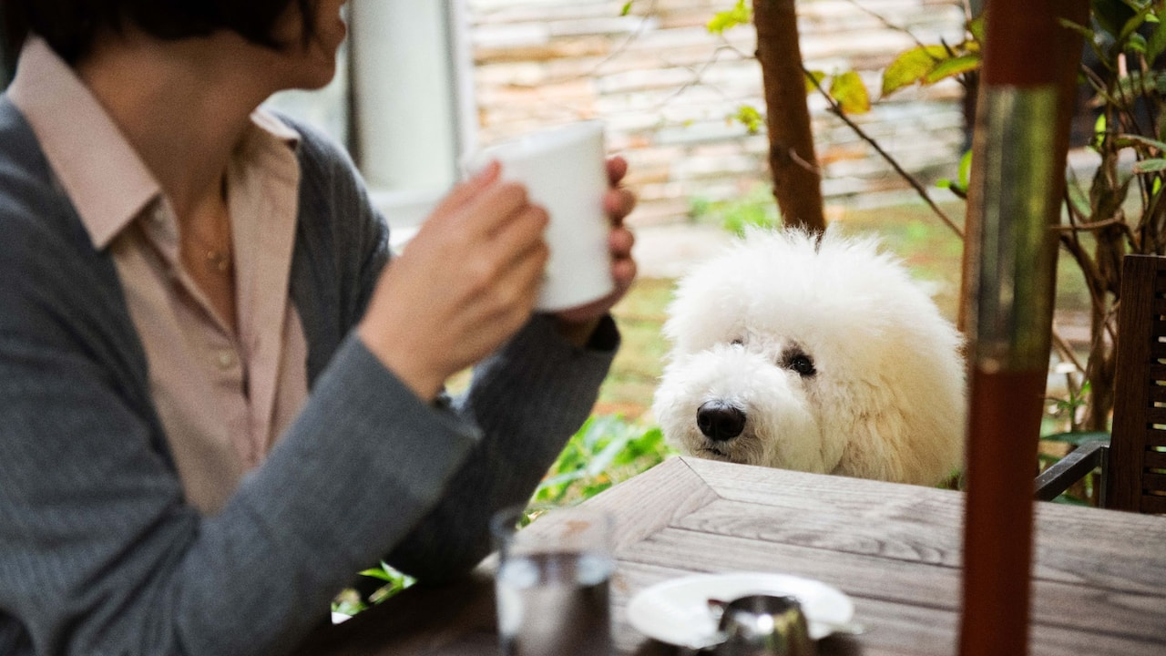 Hyatt Regency Hakone Resort & Spa| Living Room Dog Cafe