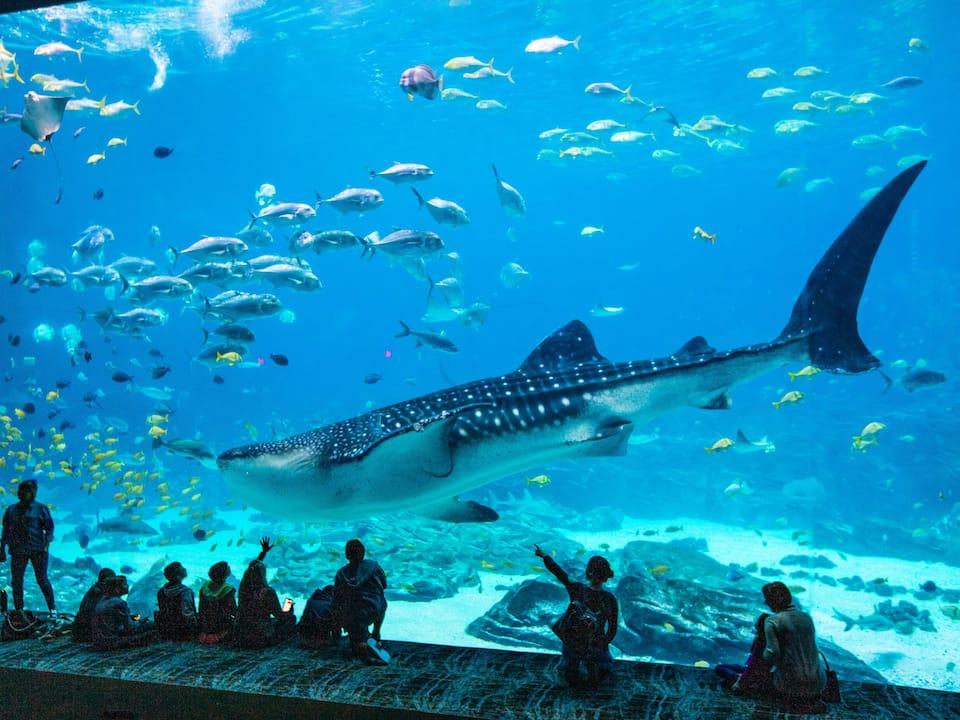 Image of the Georgia Aquarium near Hyatt Regency Atlanta