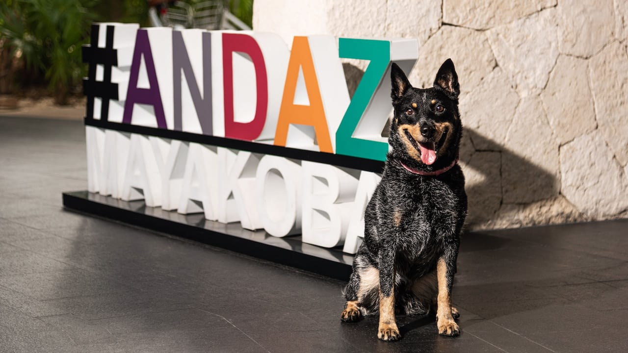Andaz Mayakoba Resort Riviera Maya Pet Friendly