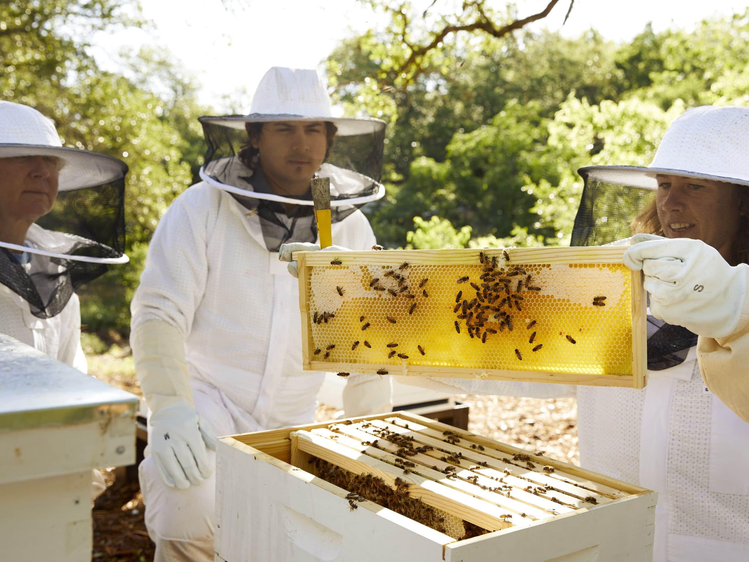 Farm Bees