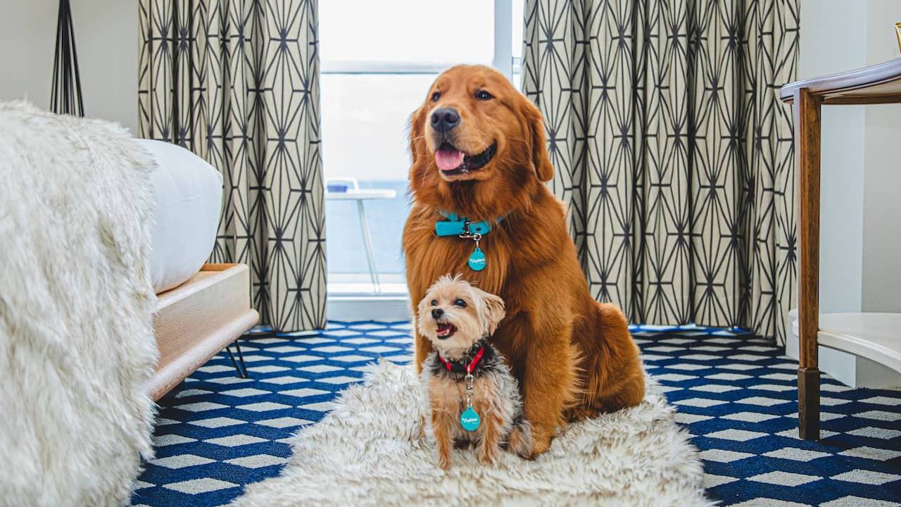 Two dogs in a pet friendly Miami hotel room at The Confidante Miami Beach