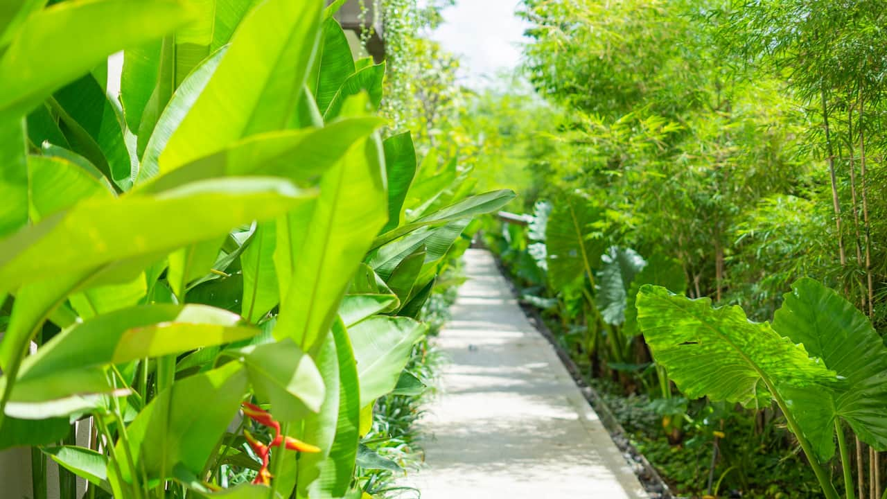 Lush Garden at Andaz Bali, Sanur