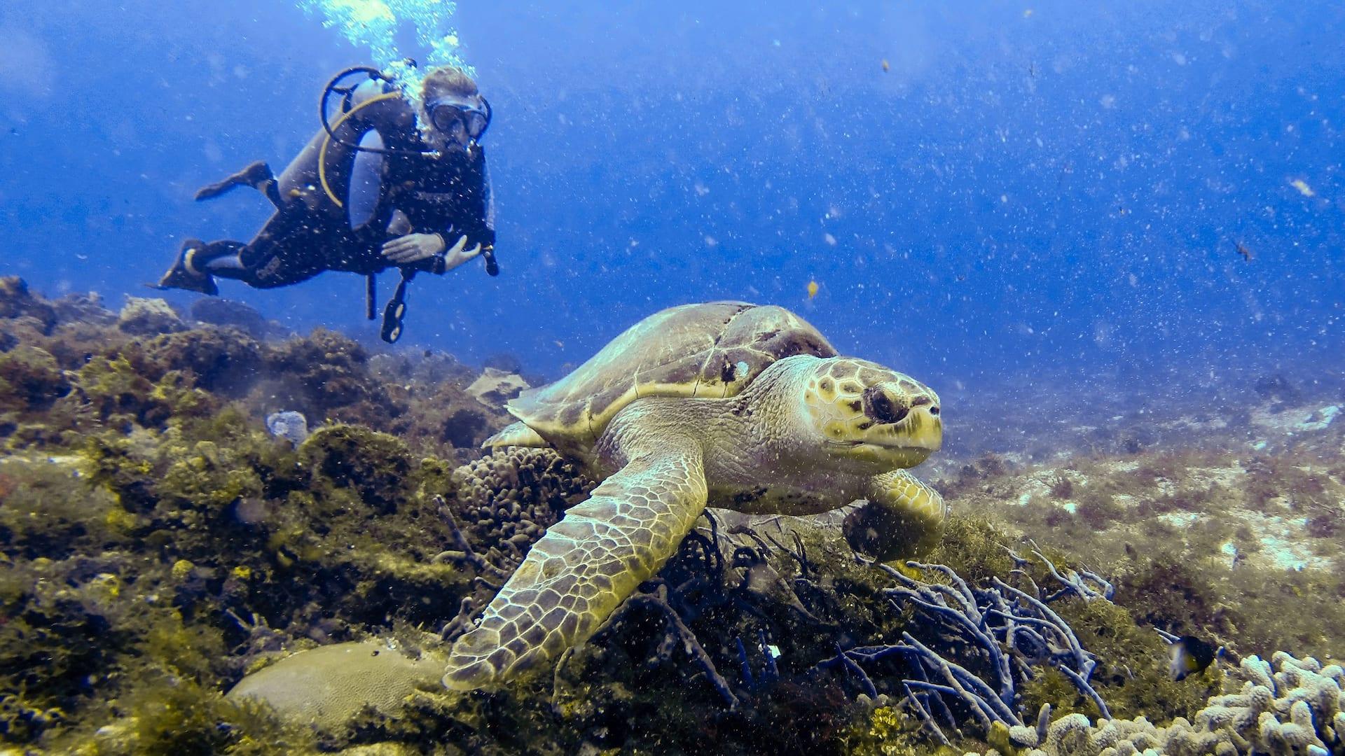 Park Hyatt Zanzibar Turtle