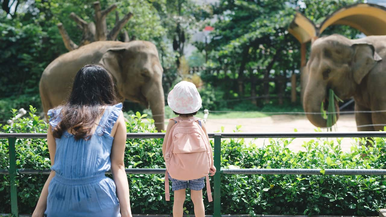 Local Attractions Zoo