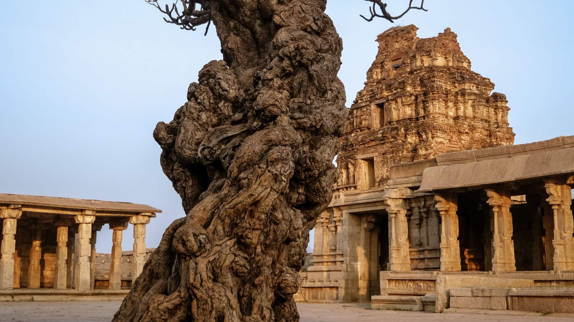 Vijaya Vithalla Tree
