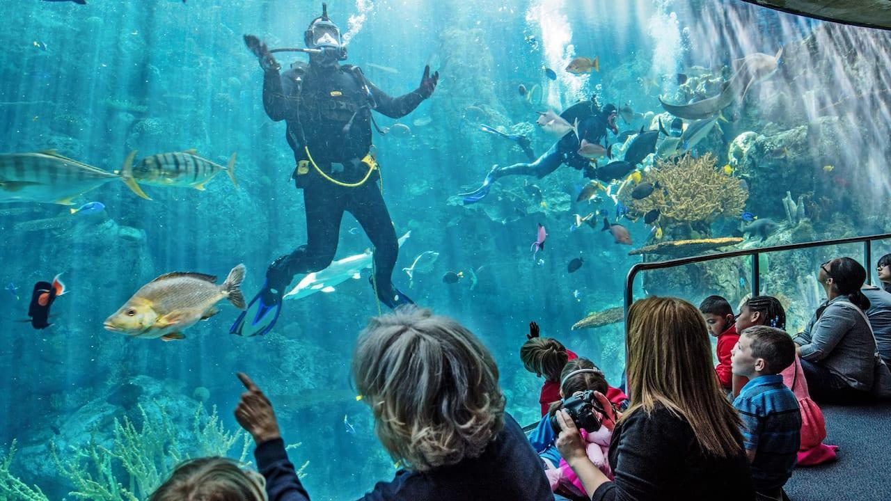Long Beach Aquarium Diver
