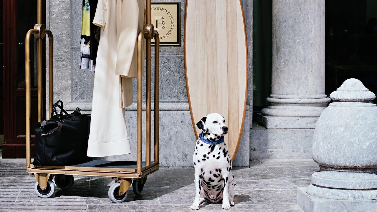 Pet-friendly hotel in Biarritz Dalmatien seating near Hôtel du Palais