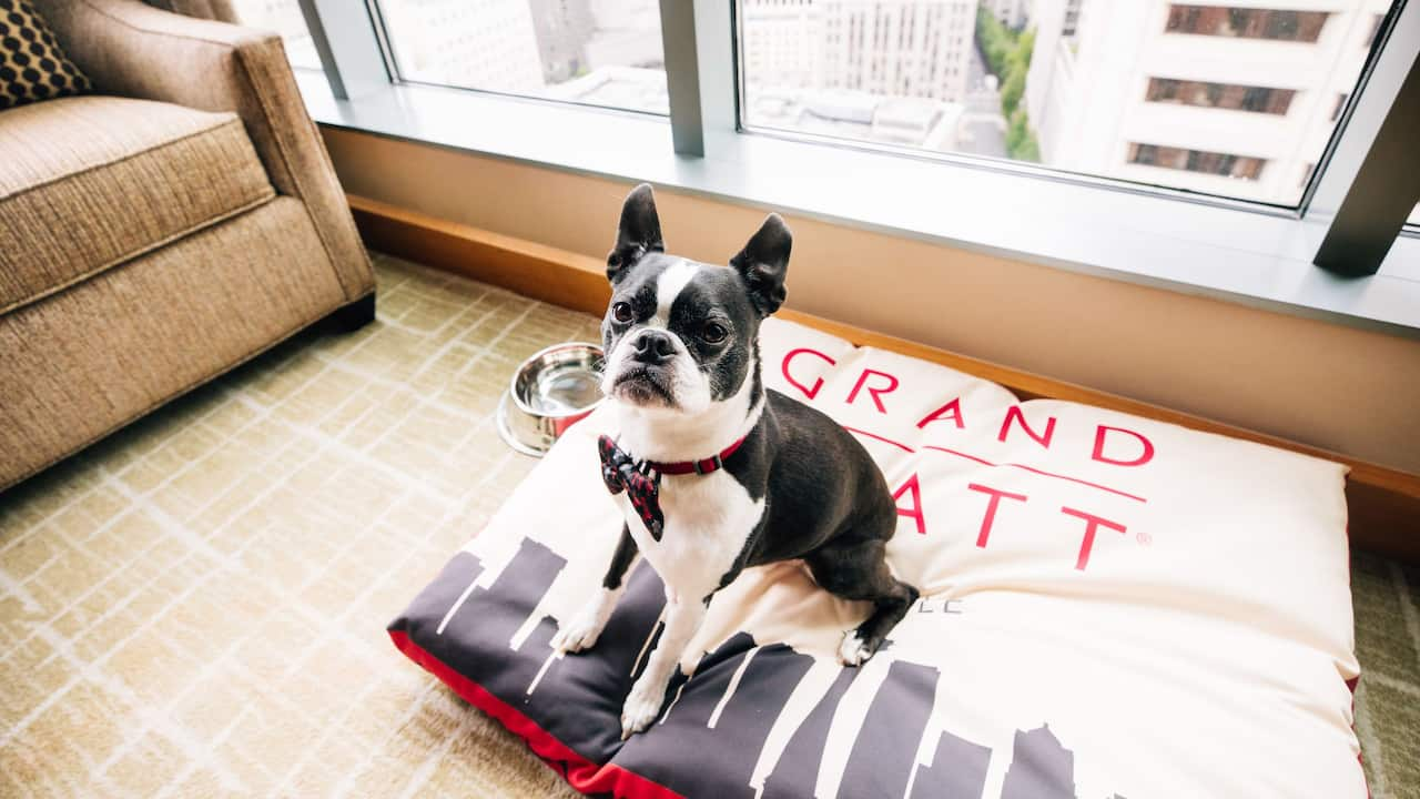Pet Friendly Guestroom Amenity